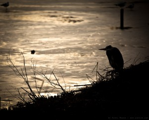 bird-on-frozen-sunset